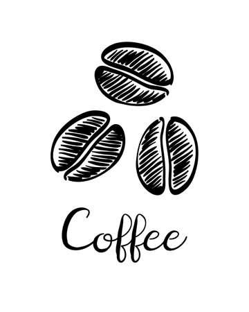 커피 콩. 잉크 스케치 흰색 배경에 고립입니다. 손으로 그린 된 벡터 일러스트 레이 션. 복고 스타일입니다.