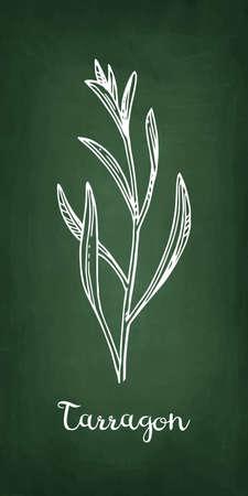 Tarragon Chalk sketch, Hand drawn vector illustration