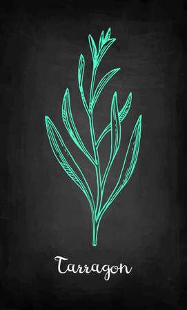 タラゴンチョークスケッチ、手描きベクトルイラスト  イラスト・ベクター素材