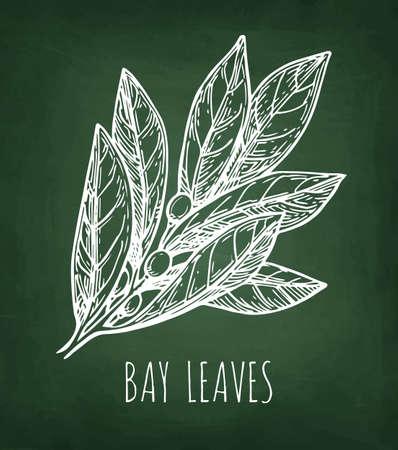 Bay laurel branch. Chalk sketch on blackboard background. Hand drawn vector illustration. Retro style. Ilustracja