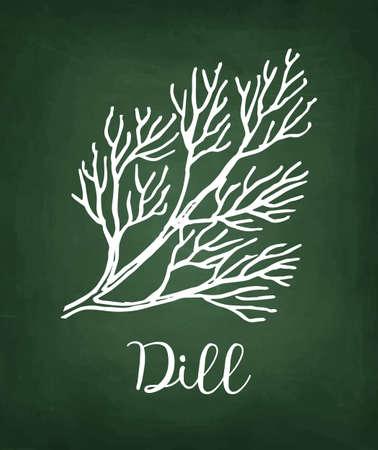 Chalk sketch of dill on blackboard background. Hand drawn vector illustration. Retro style. Çizim