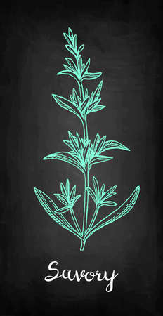 Savory. Chalk sketch on blackboard background. Hand drawn vector illustration. Retro style. Banco de Imagens - 92935307