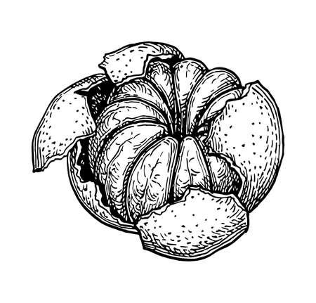 껍질없이 만다린 오렌지의 잉크 스케치. 흰색 배경에 고립.