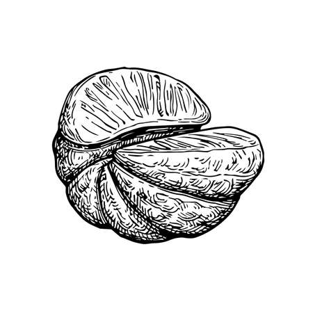 Half of mandarin orange without peel. Ink sketch isolated on white background. Hand drawn vector illustration. Retro style.