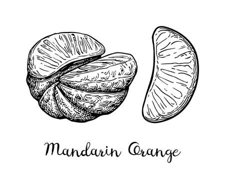 Ink sketch of mandarin orange without peel. Isolated on white background. Hand drawn vector illustration. Retro style.