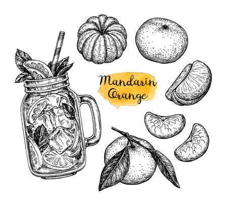 Mandarin orange set. Ink sketch isolated on white background. Hand drawn vector illustration. Retro style.