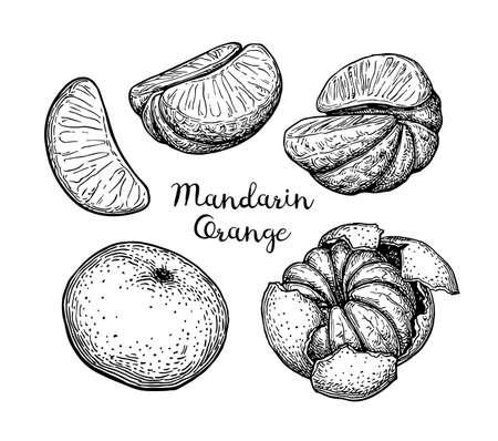 Mandarin orange set. Ink sketch isolated on white background. Hand drawn vector illustration. Retro style.