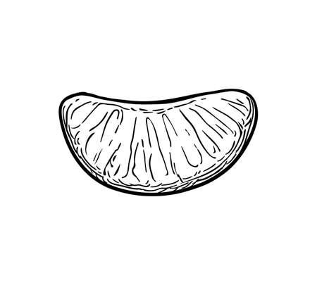 Plakje mandarijn. Inktschets geïsoleerd op een witte achtergrond. Hand getrokken vectorillustratie. Retro stijl.