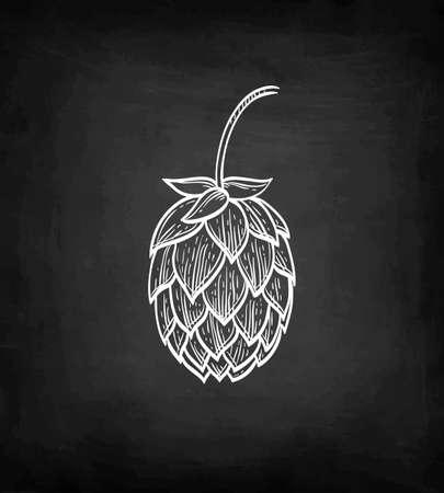 Chalk sketch of hops on blackboard background. Hand drawn vector illustration. Retro style.