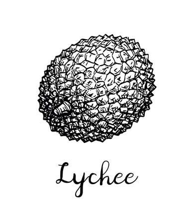 Esquisse à l'encre de fruits de litchi. Isolé sur fond blanc Illustration vectorielle dessinés à la main. Style rétro. Banque d'images - 94858974