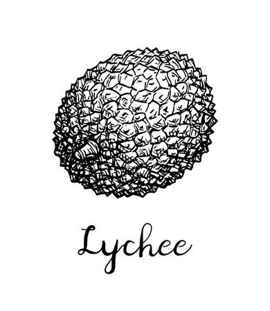 Ink sketch of lychee fruit. Isolated on white background. Hand drawn vector illustration. Retro style. Illustration