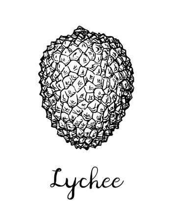 Esquisse à l'encre de fruits de litchi. Banque d'images - 94940764