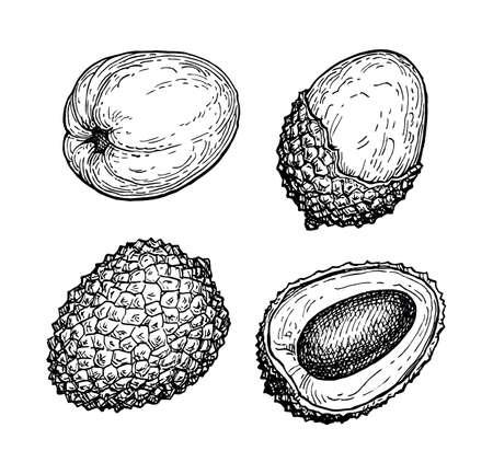 Ink sketch set of lychee fruits.