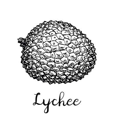 Esquisse à l'encre de fruits de litchi. Banque d'images - 94940766