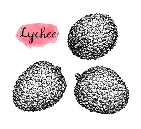 Ink sketch set of lychee fruits.