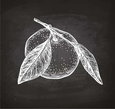 Mandarin orange with leaves. Chalk sketch on blackboard background. Hand drawn vector illustration. Retro style.