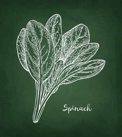 Chalk sketch of spinach. 일러스트