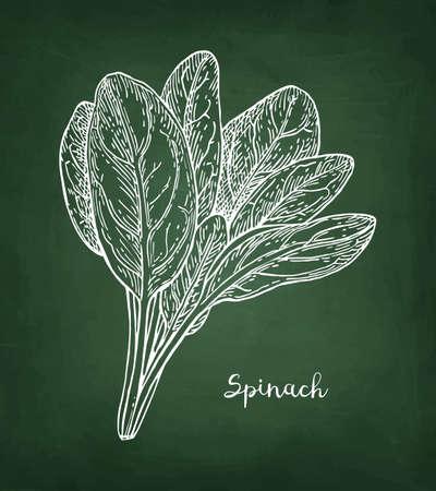Chalk sketch of spinach. Vettoriali