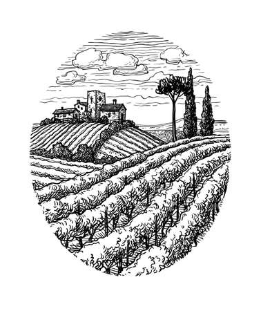 Hand drawn vineyard landscape.