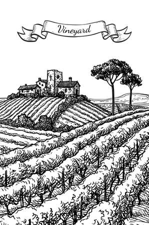 Hand drawn vineyard landscape. Ink sketch. Vintage style vector illustration. 일러스트