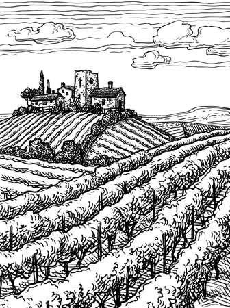 Hand drawn vineyard landscape  isolated on plain  background. Illustration