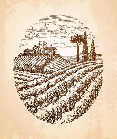 Hand drawn vineyard landscape  isolated on plain on pink  background.