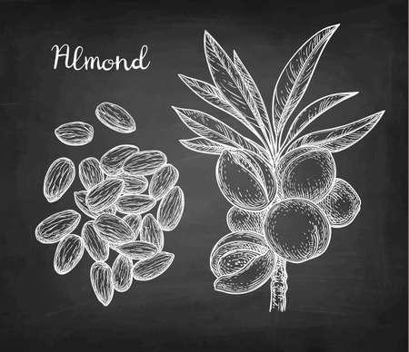 Chalk sketch of almond illustration.