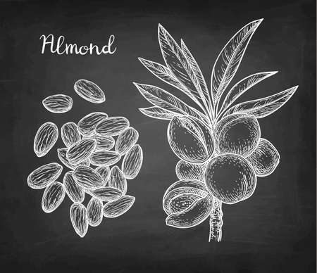 Chalk sketch of almond illustration.