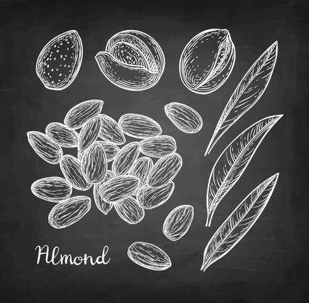 Chalk sketch of almond. Vector illustration.