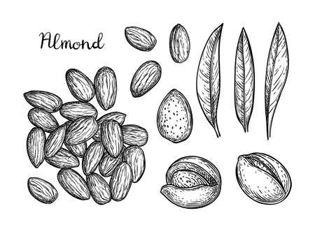 아몬드 일러스트의 잉크 스케치입니다.