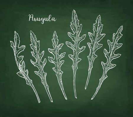 Kreideskizze von Arugula auf Tafelhintergrund. Handgezeichnete Vektor-Illustration. Retro-Stil. Standard-Bild - 98900248