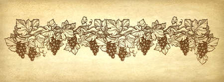Ink sketch of grapes on old paper background illustration.
