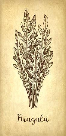 Ink sketch of arugula.