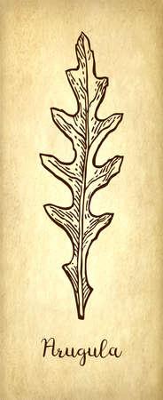 Ink sketch of arugula. Banco de Imagens - 100392888