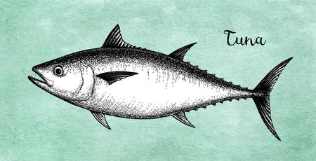 Ink sketch of tuna vector illustration design.