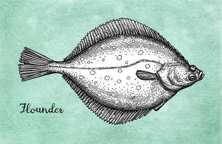 Flatfish. Ink sketch of flounder.