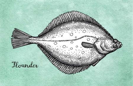 Flatfish. Ink sketch of flounder.