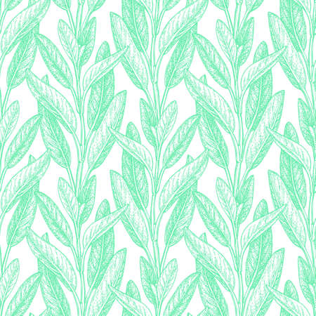 Seamless pattern. Sage ink sketch on white background. Hand drawn vector illustration of salvia. Retro style. Çizim