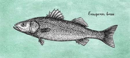 Ink sketch of European bass.