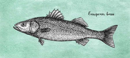 Ink sketch of European bass.
