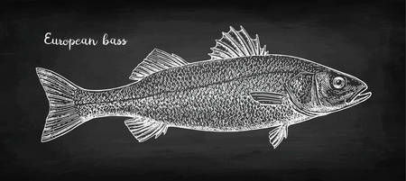 Chalk sketch of sea bass