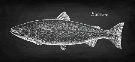 Chalk sketch of salmon Фото со стока - 101933444