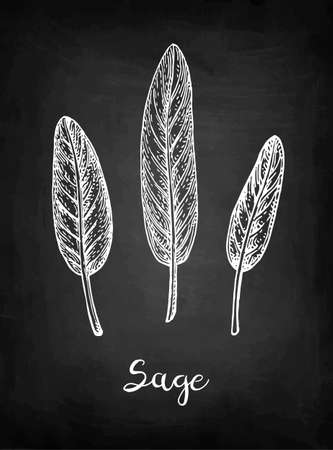 Sage chalk sketch.