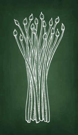 Chalk sketch of garlic chives