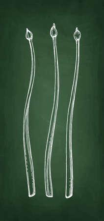 Chalk sketch of garlic chives Banco de Imagens - 102514961