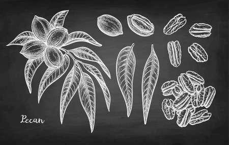 Chalk sketch of pecan Vettoriali
