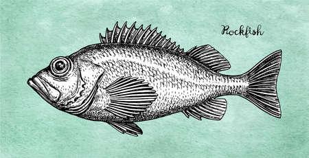 Dibujo tinta de pez roca.