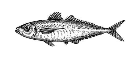 Ink sketch of horse mackerel. Illustration