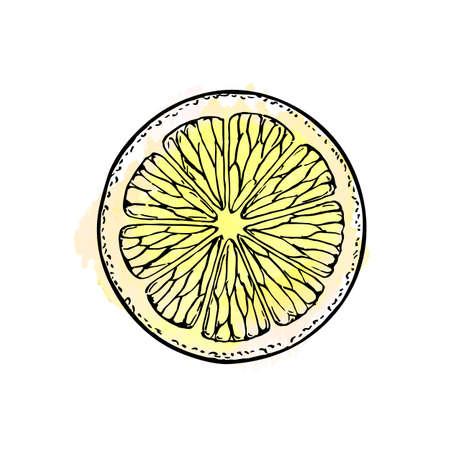 Lemon slice. Isolated on white background. Hand drawn vector illustration. Retro style. Ilustração