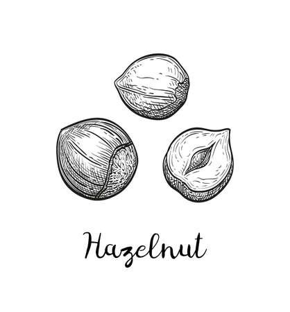 Ink sketch of hazelnut.